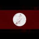Shinrei Syndicate